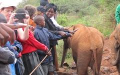sheldrick-elephant-orphanage